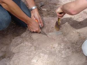 De vuistbijlin opgraving